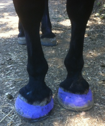 how to correctly put on horse boots